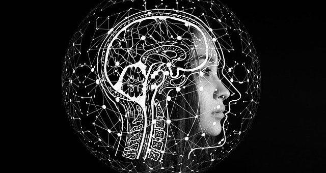 Evolution du cerveau